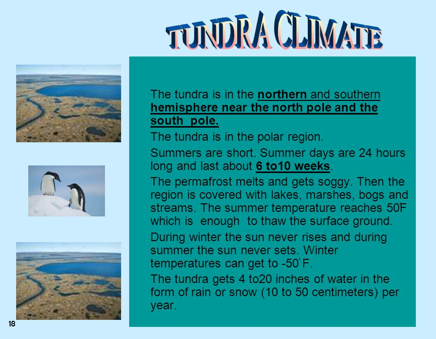 TUNDRA CLIMATE The tundra is in the northern and southern hemisphere near the north pole and the south pole.