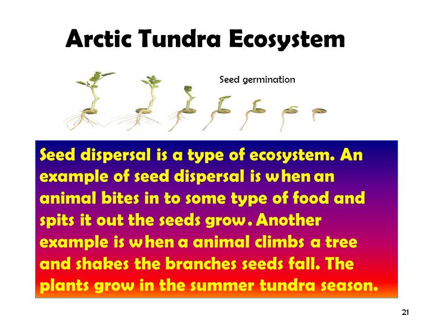 Arctic Tundra Ecosystem