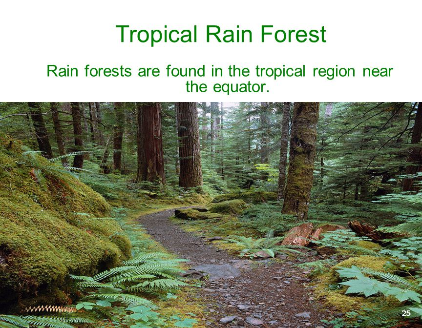 Rain forests are found in the tropical region near the equator.