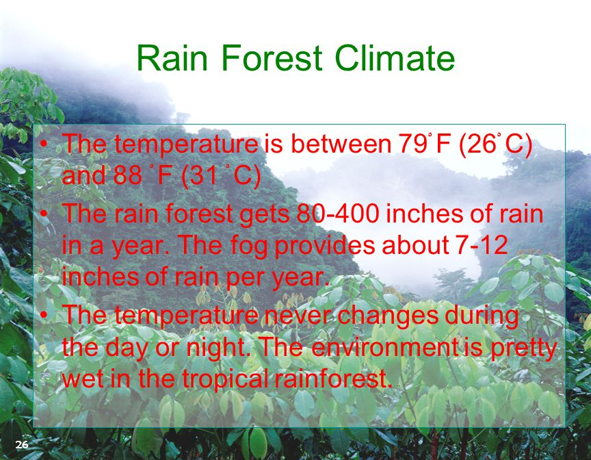 Rain Forest Climate The temperature is between 79ْ F (26ْ C) and 88 ْ F (31 ْ C)