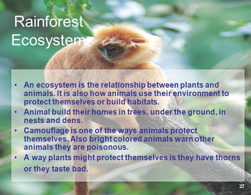 Rainforest Ecosystem