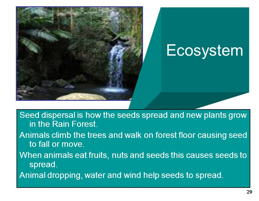 Ecosystem Seed dispersal is how the seeds spread and new plants grow in the Rain Forest.