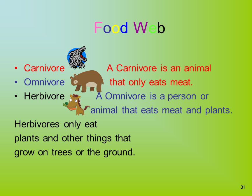 Food Web Carnivore A Carnivore is an animal