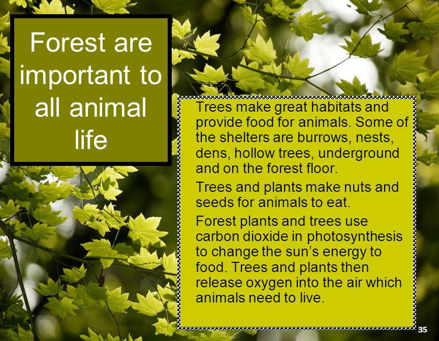 Forest are important to all animal life