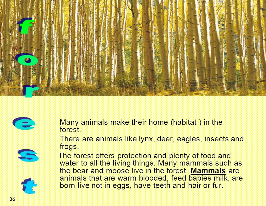 forest Many animals make their home (habitat ) in the forest.