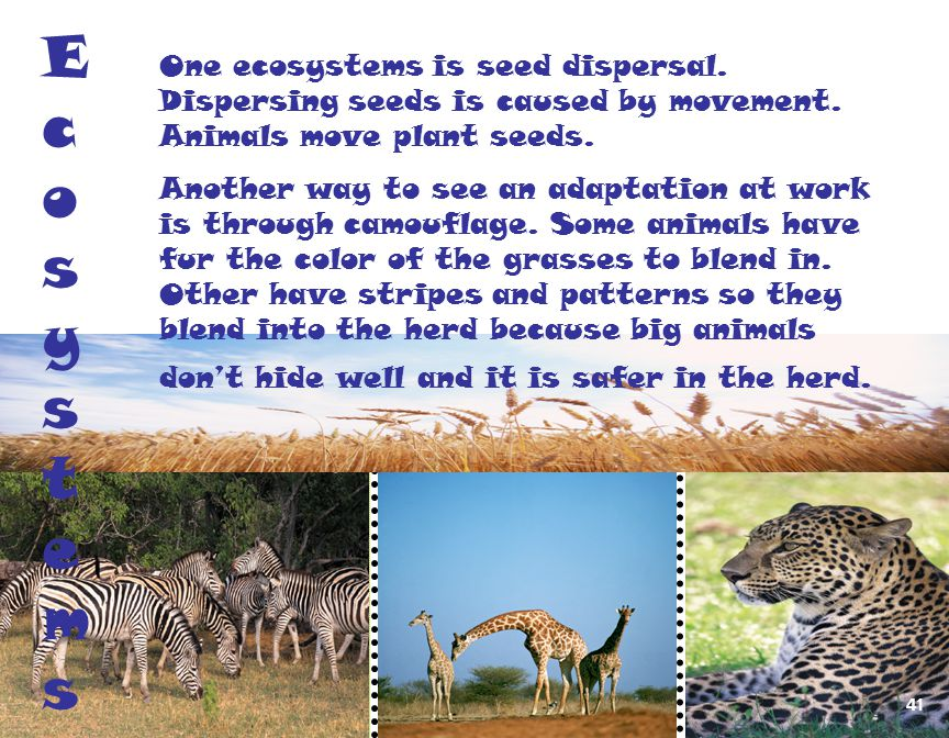 Ecosystems One ecosystems is seed dispersal. Dispersing seeds is caused by movement. Animals move plant seeds.