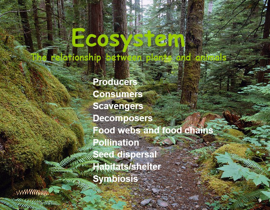Ecosystem The relationship between plants and animals