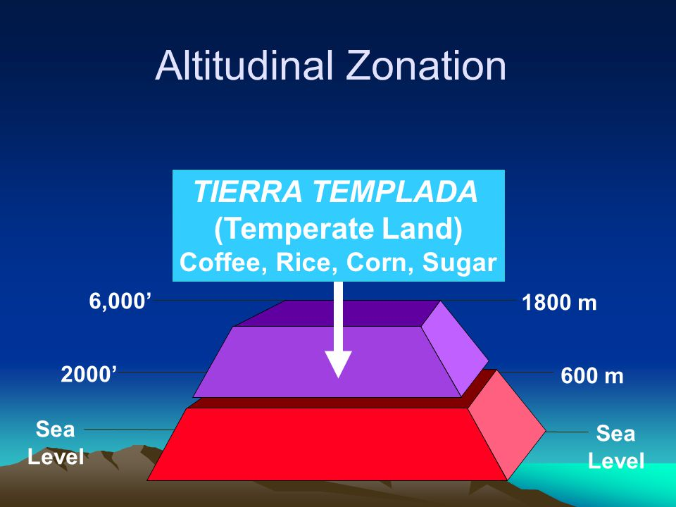 Altitudinal Zonation TIERRA TEMPLADA (Temperate Land)