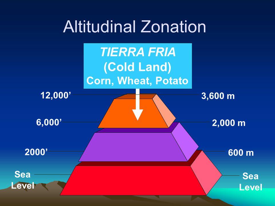 Altitudinal Zonation TIERRA FRIA (Cold Land) Corn, Wheat, Potato