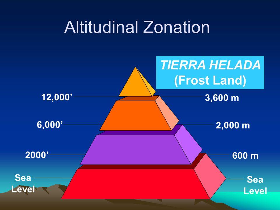 Altitudinal Zonation TIERRA HELADA (Frost Land) 12,000' 3,600 m 6,000'