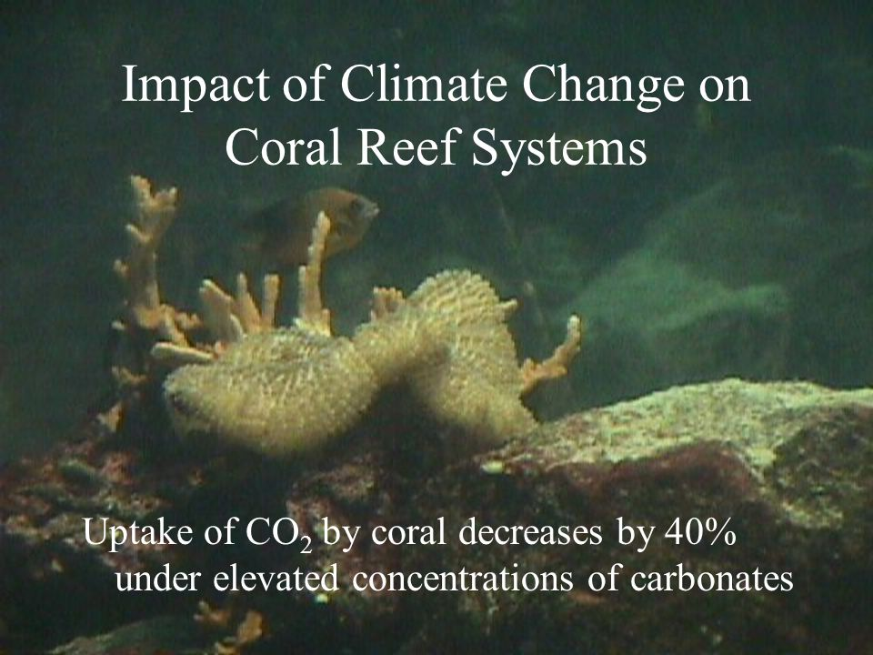 Impact of Climate Change on Coral Reef Systems