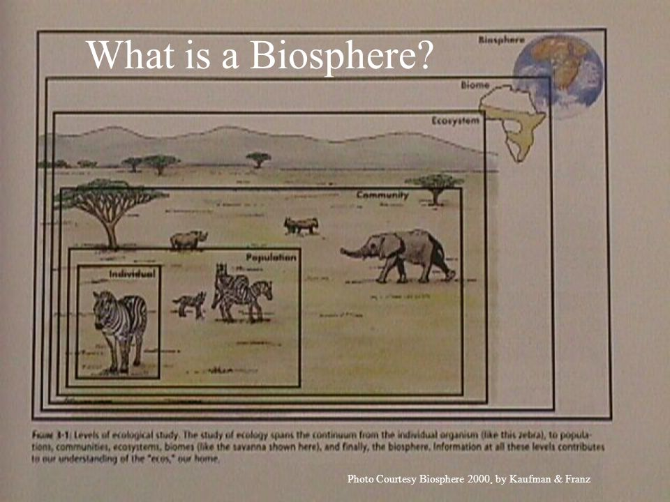 What is a Biosphere Photo Courtesy Biosphere 2000, by Kaufman & Franz
