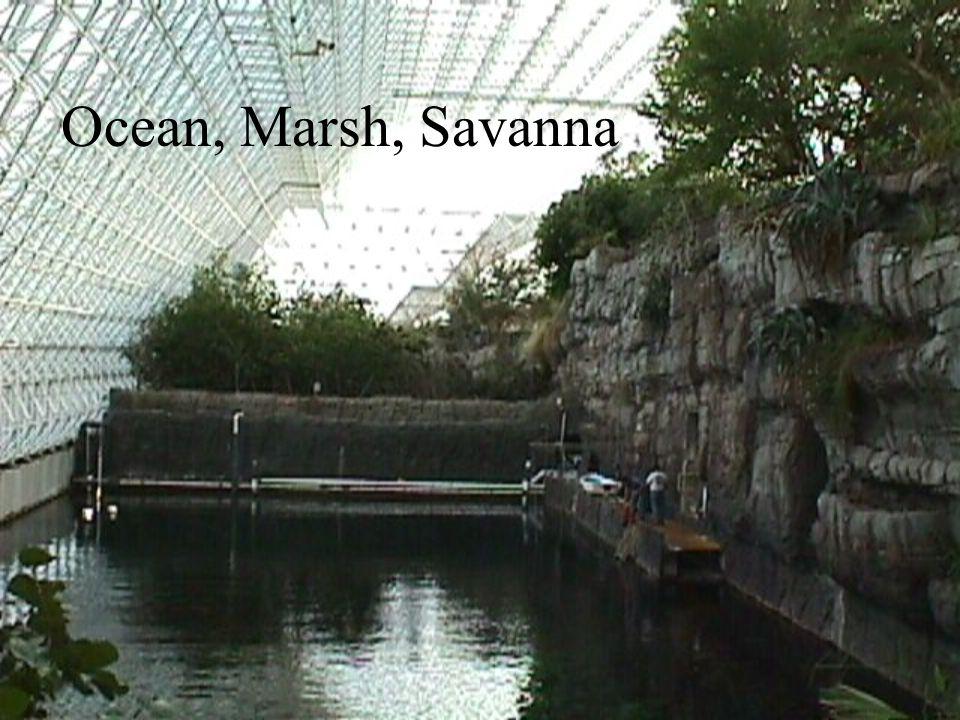 Ocean, Marsh, Savanna