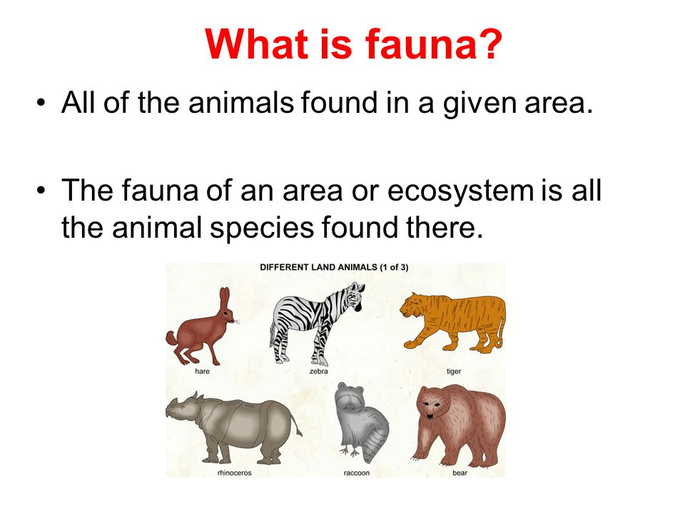 What is fauna All of the animals found in a given area.