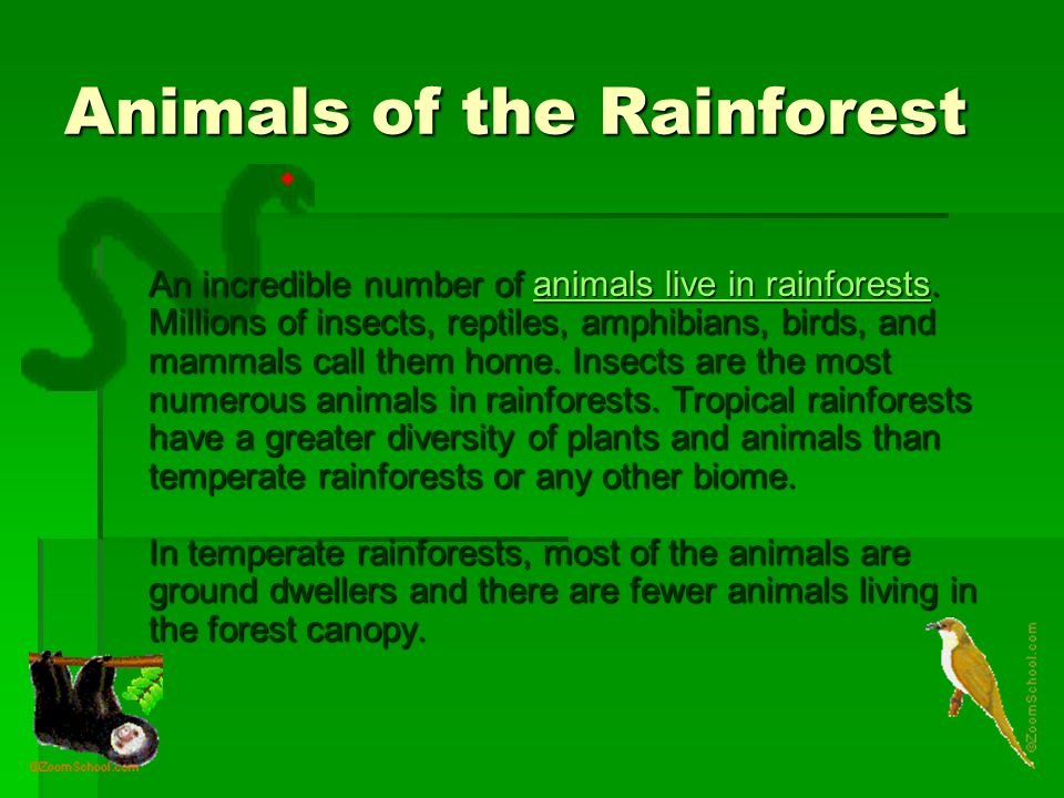 Animals of the Rainforest