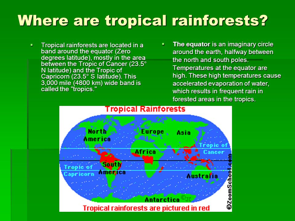 Where are tropical rainforests