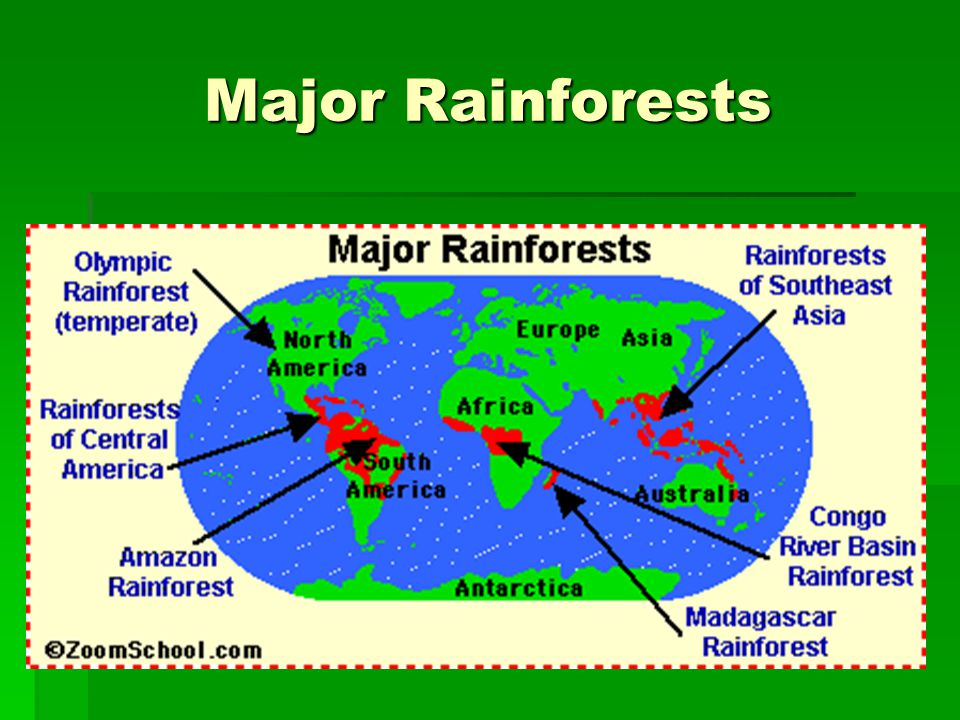 Major Rainforests