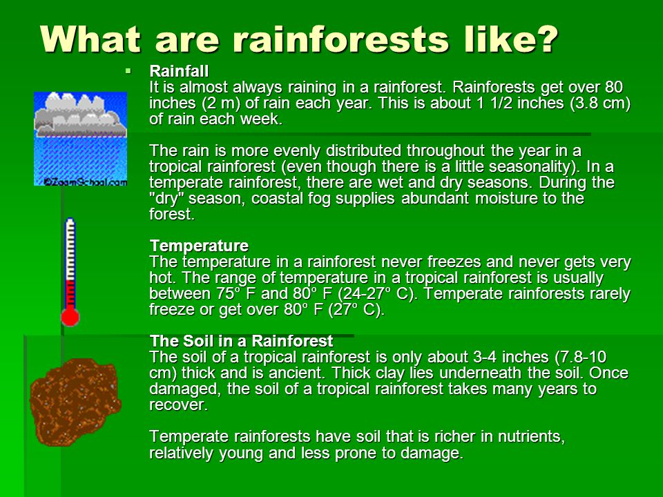 What are rainforests like