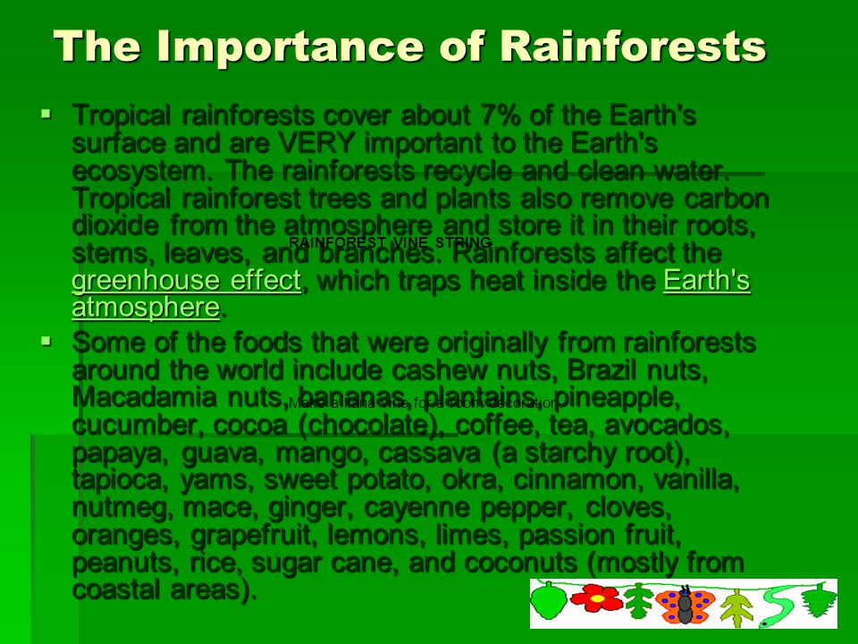 the importance of protecting the rainforest Try the why save the rainforest activity to learn more about helping to save the rain forests science library adventures | kids' place education place.