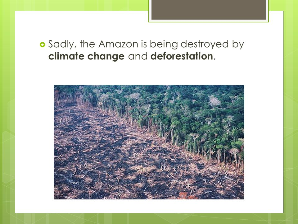 Sadly, the Amazon is being destroyed by climate change and deforestation.