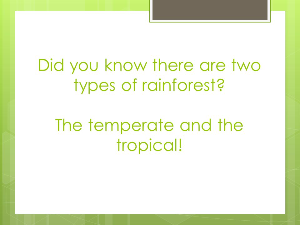 Did you know there are two types of rainforest