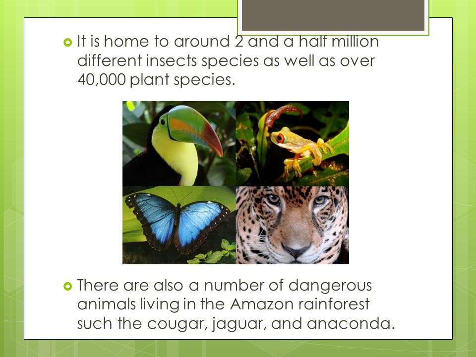 It is home to around 2 and a half million different insects species as well as over 40,000 plant species.