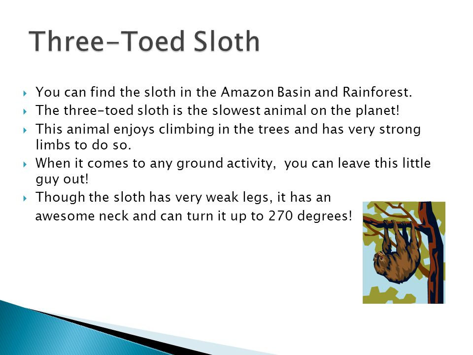 Three-Toed Sloth You can find the sloth in the Amazon Basin and Rainforest. The three-toed sloth is the slowest animal on the planet!