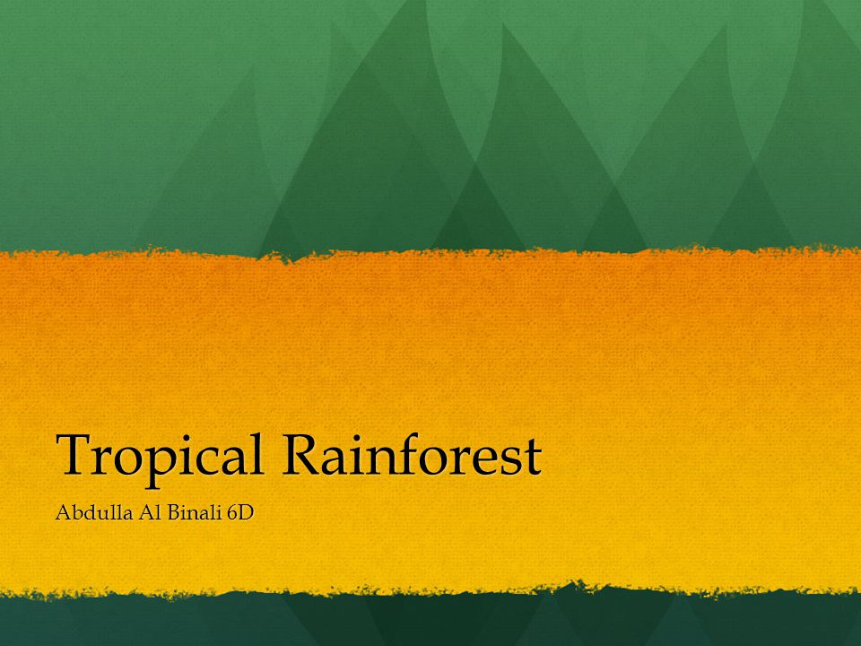 Tropical Rainforest Abdulla Al Binali 6D