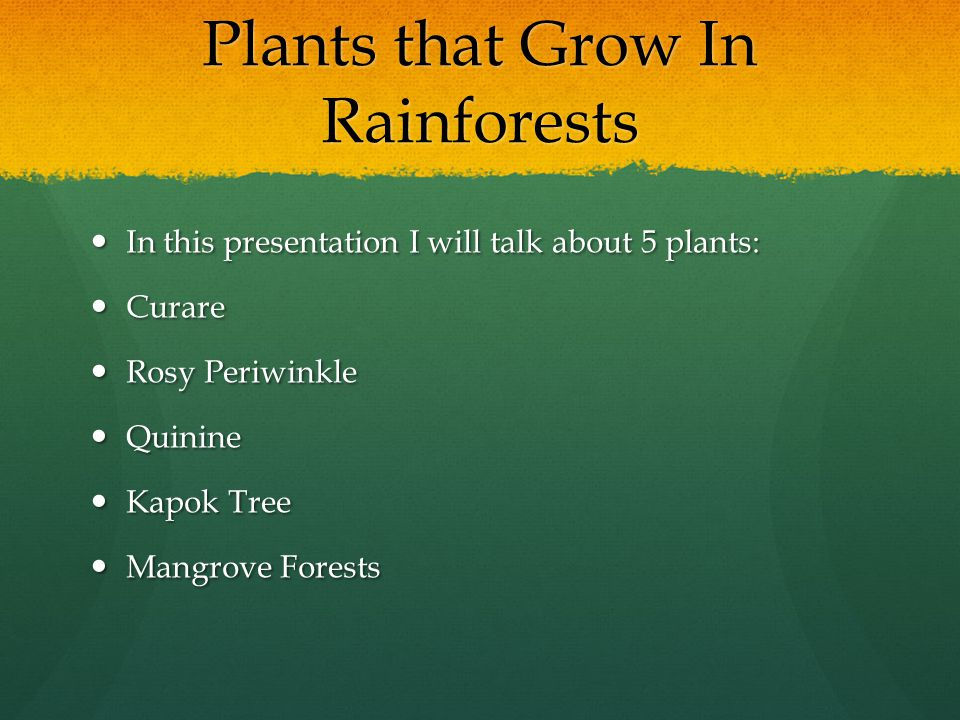 Plants that Grow In Rainforests