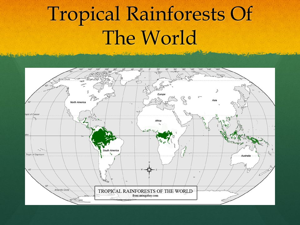 Tropical Rainforests Of The World