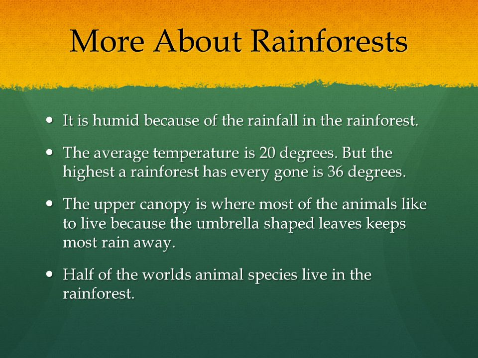 More About Rainforests