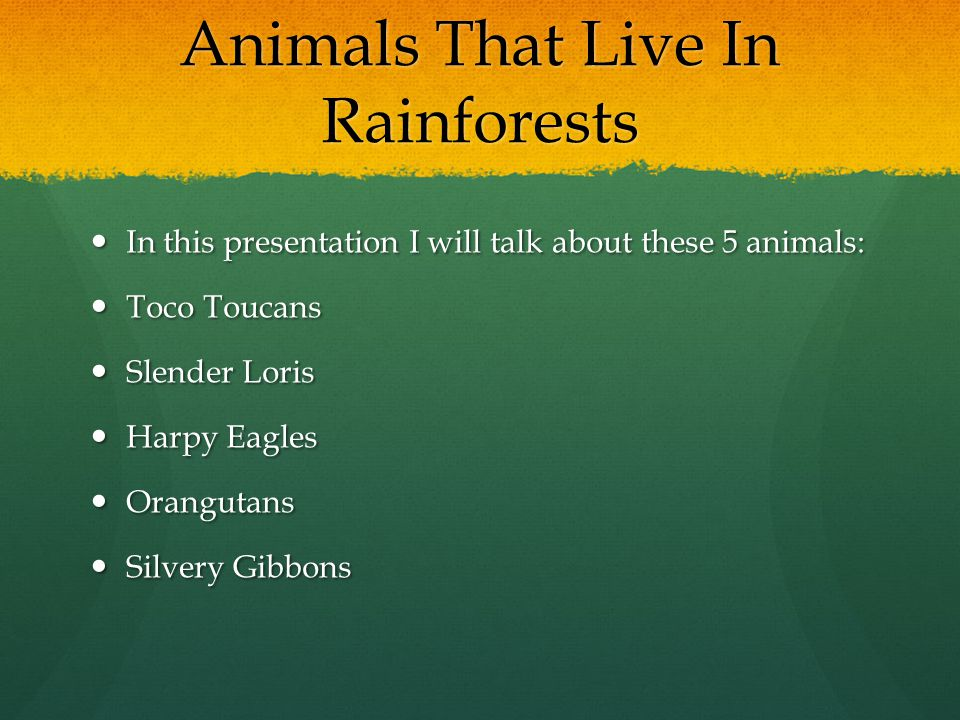 Animals That Live In Rainforests