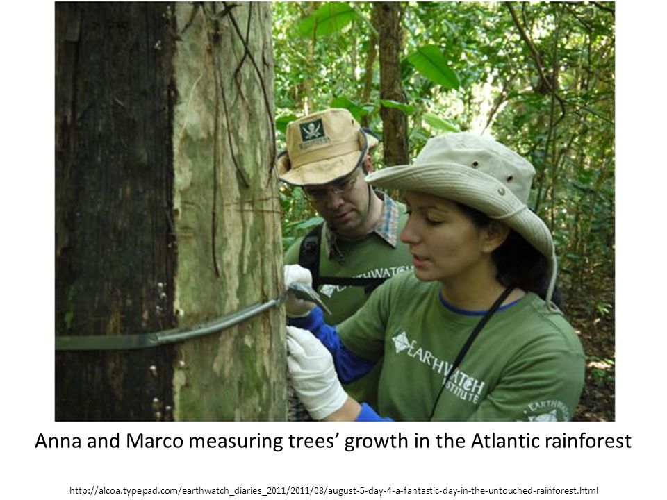 Anna and Marco measuring trees' growth in the Atlantic rainforest