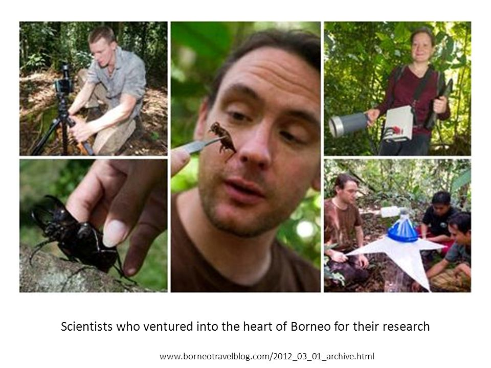 Scientists who ventured into the heart of Borneo for their research