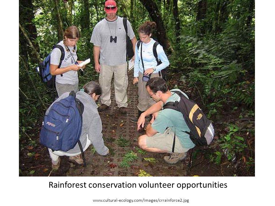 Rainforest conservation volunteer opportunities