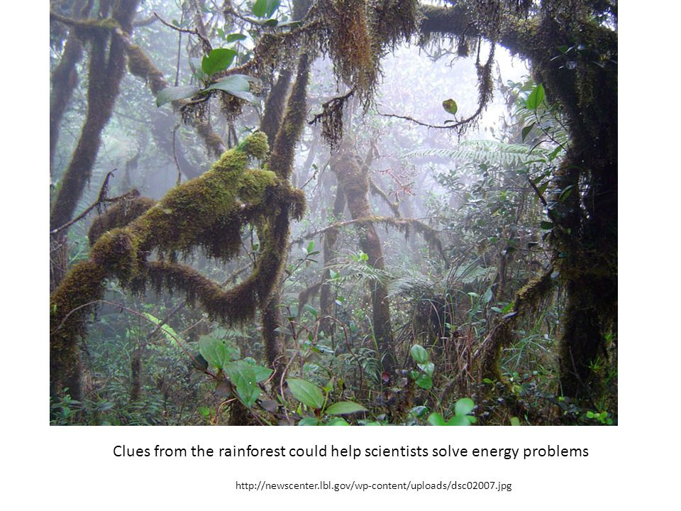 Clues from the rainforest could help scientists solve energy problems