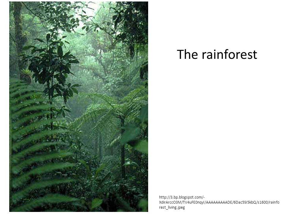 The rainforest http://3.bp.blogspot.com/-XdirArccO3M/TV4uFE0nqyI/AAAAAAAAADE/6Dac5SI5kbQ/s1600/rainforest_living.jpeg.