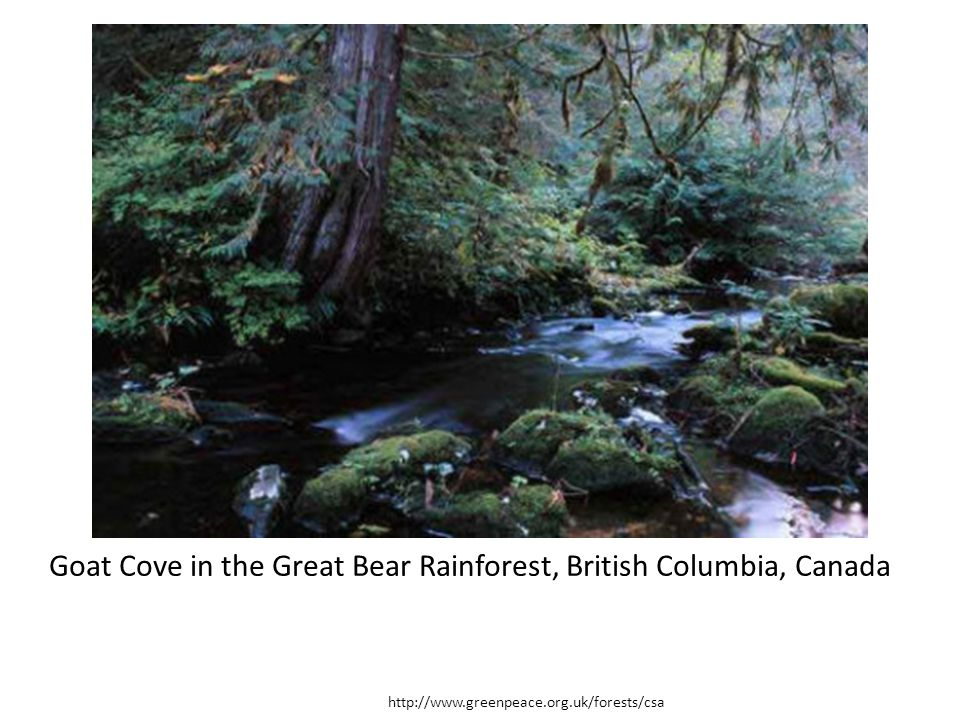 Goat Cove in the Great Bear Rainforest, British Columbia, Canada
