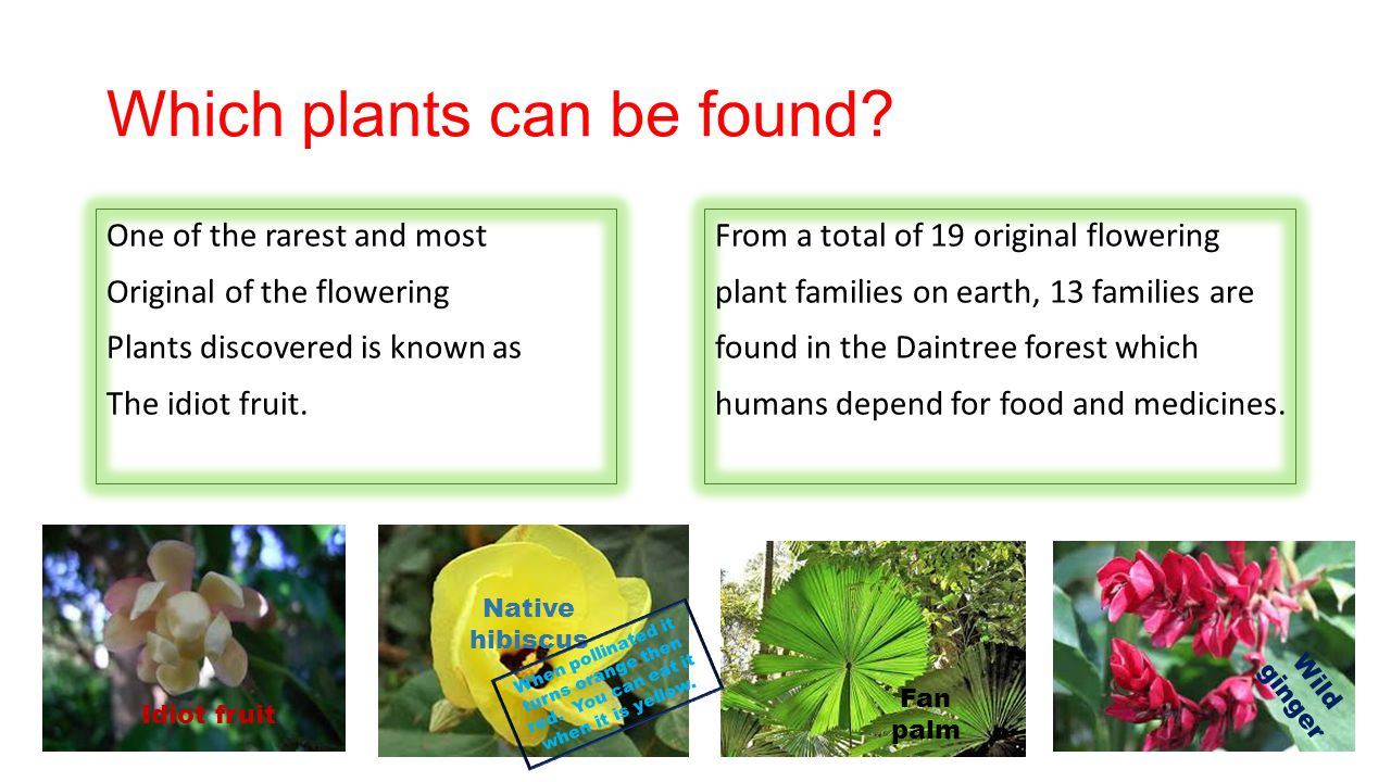 Which plants can be found