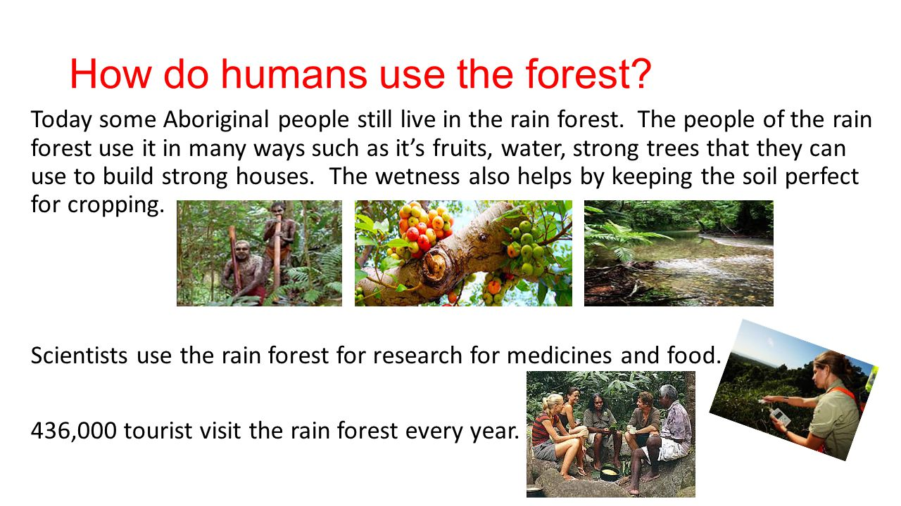 How do humans use the forest