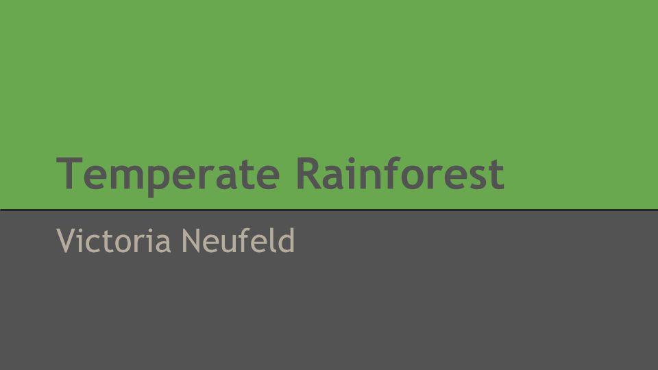 Temperate Rainforest Victoria Neufeld