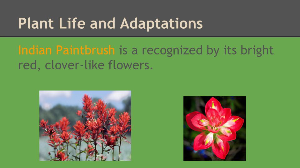 Plant Life and Adaptations
