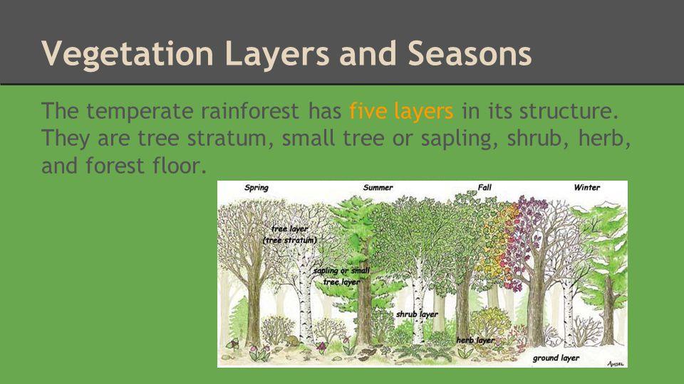Vegetation Layers and Seasons
