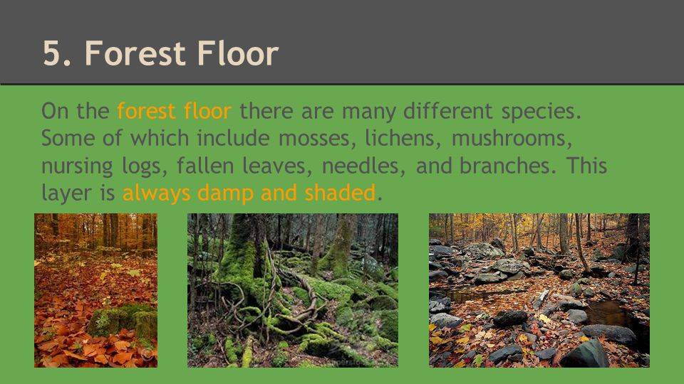 5. Forest Floor