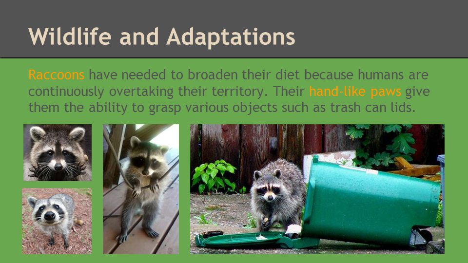 Wildlife and Adaptations