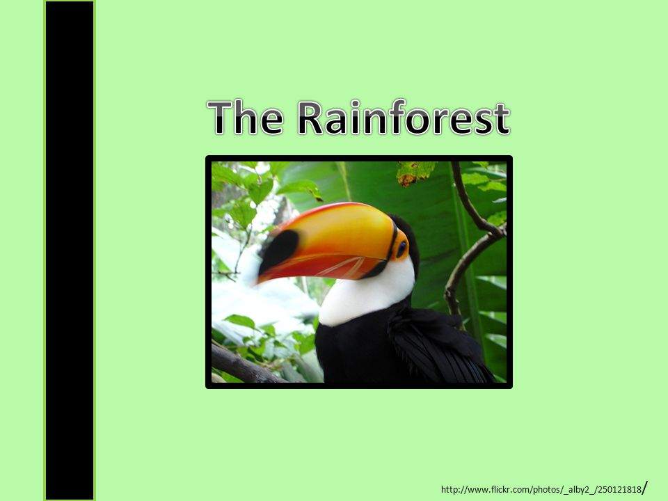 The Rainforest http://www.flickr.com/photos/_alby2_/250121818/
