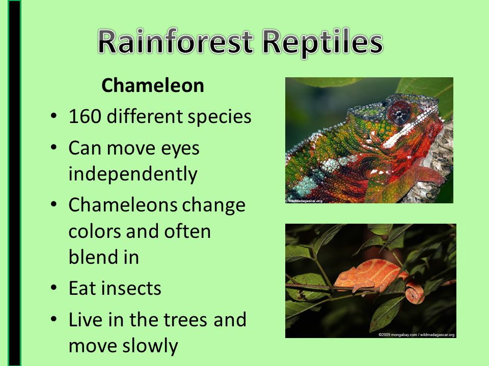 The Rainforest Ppt Video Online Download