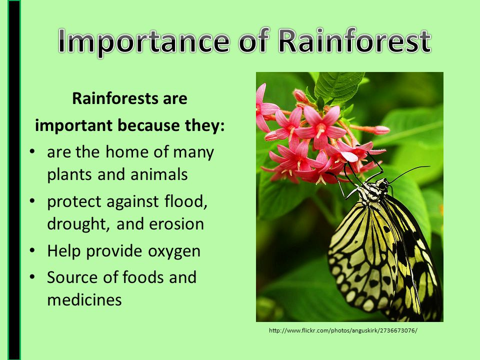 importance of plants and animals As plants offer us food and air that we are able to breath, plants have a huge economic significance.