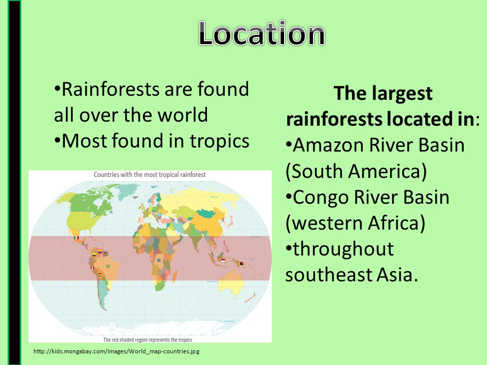The largest rainforests located in: