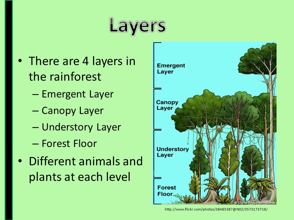 Layers There are 4 layers in the rainforest